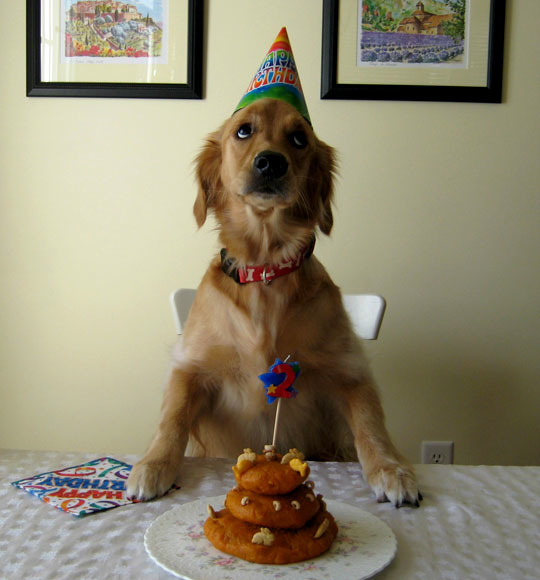 Dog's 2nd Birthday