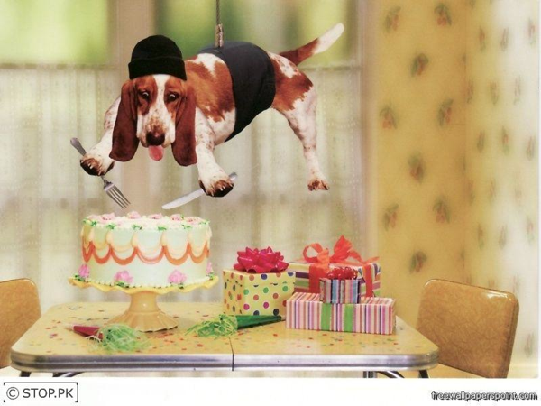 Mission Impossible Birthday Dog