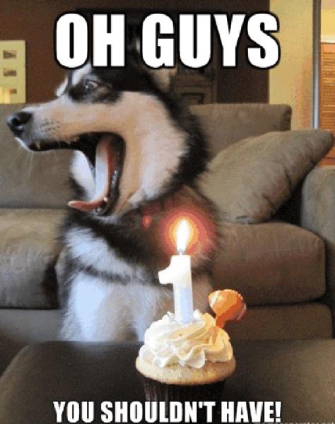 dog birthay cake