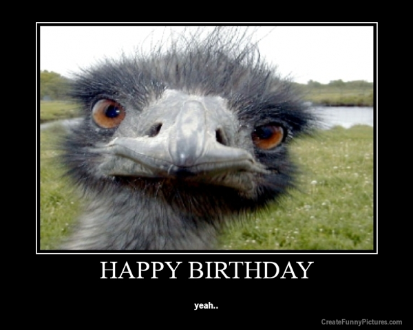 happy birthday ostrich